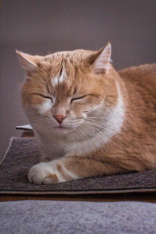 Katzenkissen Katzeninsel Katzenunterlage
